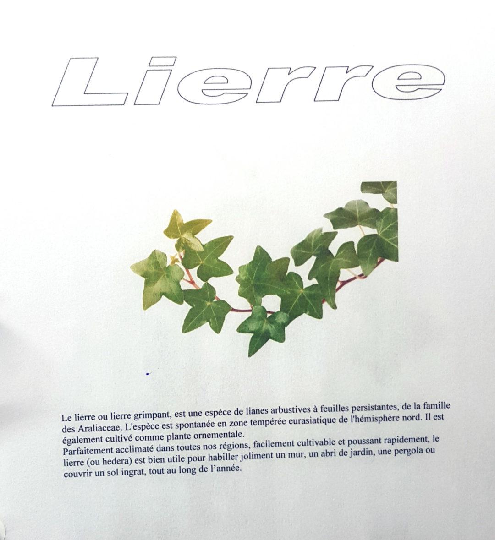 herbier 3