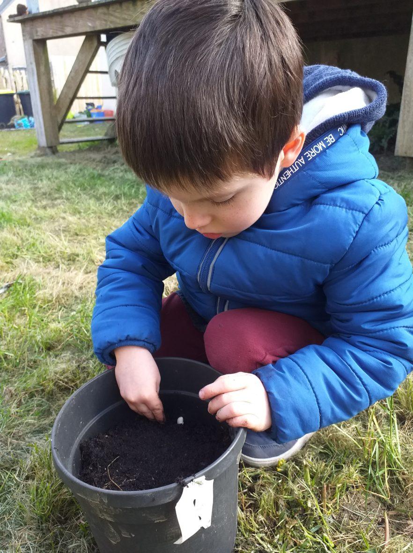 Laodren plante une graine