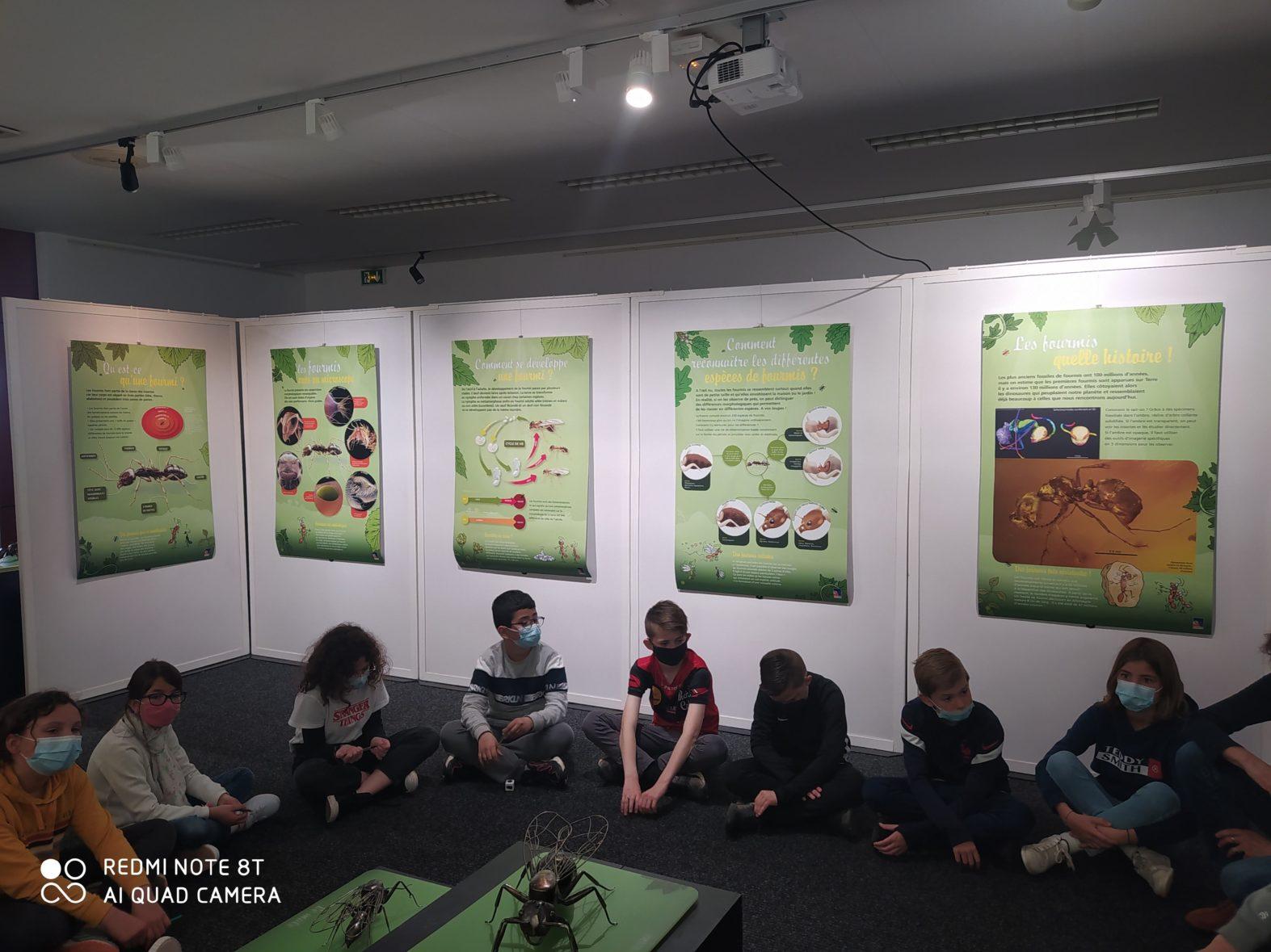 Exposition – Les fourmis